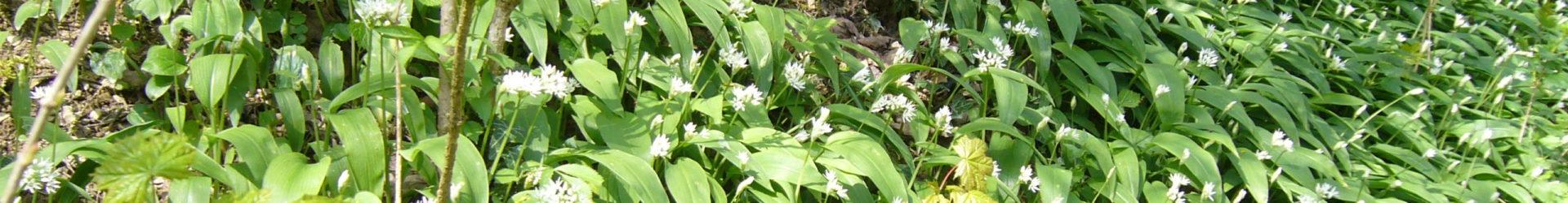ABGESAGT!   Qigong meets Wildpflanzen – Frühjahrsputz
