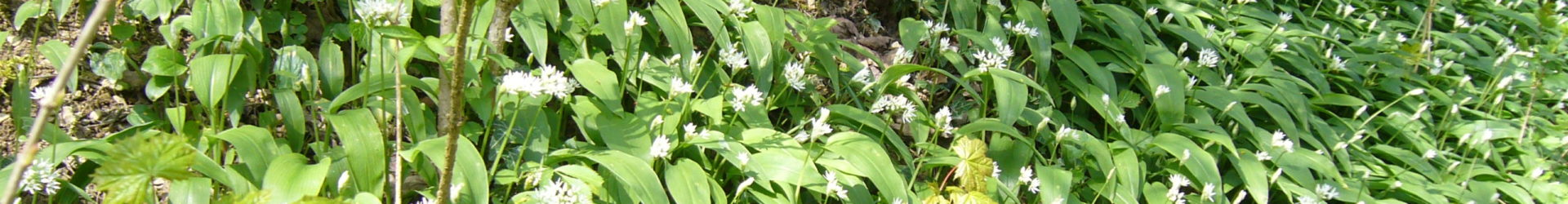 Frühjahrsputz  –  Qigong meets Wildpflanzen